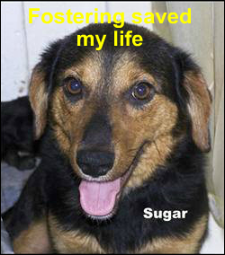 fostering saved me - sugar